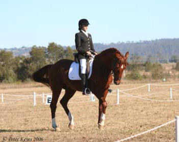 Nicole Kullen riding borrowed young Trakehner stallion 'TallyHo Kahlua'